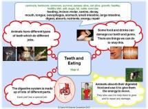 Y4 - Teeth & Eating