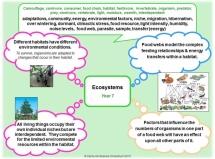 Y7 - Ecosystems