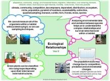 Y8 - Ecological Relationships