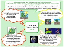 Y9 - Plants & Photosynthesis